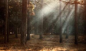 明媚天气时的树林风景摄影高清图片