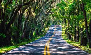 山间绿树映衬下的公路摄影高清图片