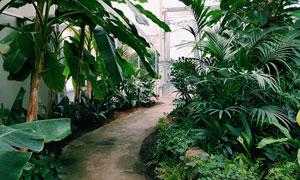 庭院小路旁的绿色植物摄影高清图片