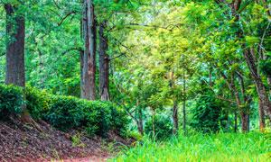 树林中的树木与青草丛摄影高清图片