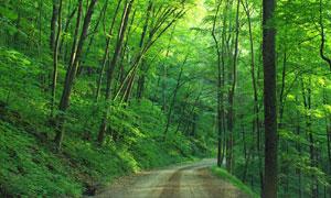深山中的小路树木风光摄影高清图片