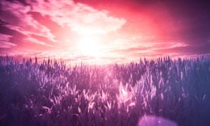 天空白云炫丽光效下的植物高清图片
