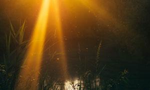 金色光线下的草丛特写摄影高清图片