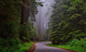 弯道处的茂密树林风光摄影高清图片