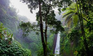 树木与山间的瀑布风景摄影高清图片