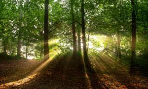 土坡上的绿树风景逆光摄影高清图片
