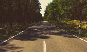 树荫下的户外公路风光摄影高清图片