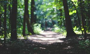 晴天阳光下照射的林间小路高清图片