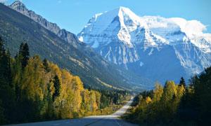 树林与通往雪山的公路摄影高清图片