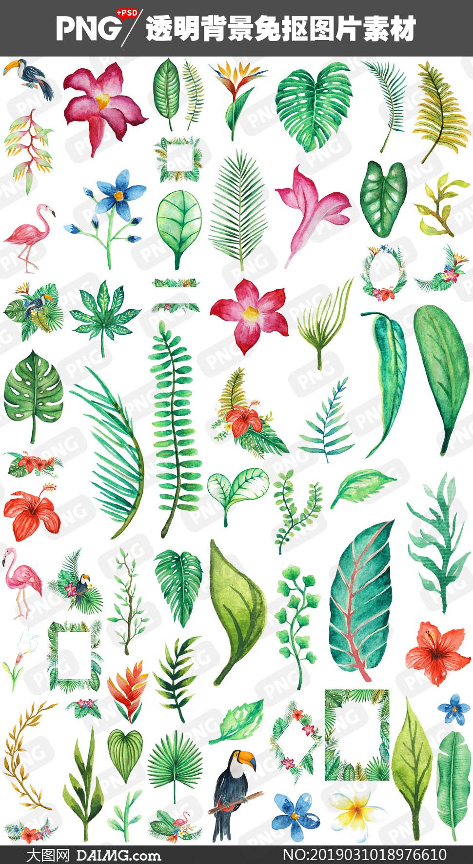 鮮花綠葉與鸚鵡等免摳圖片高清素材