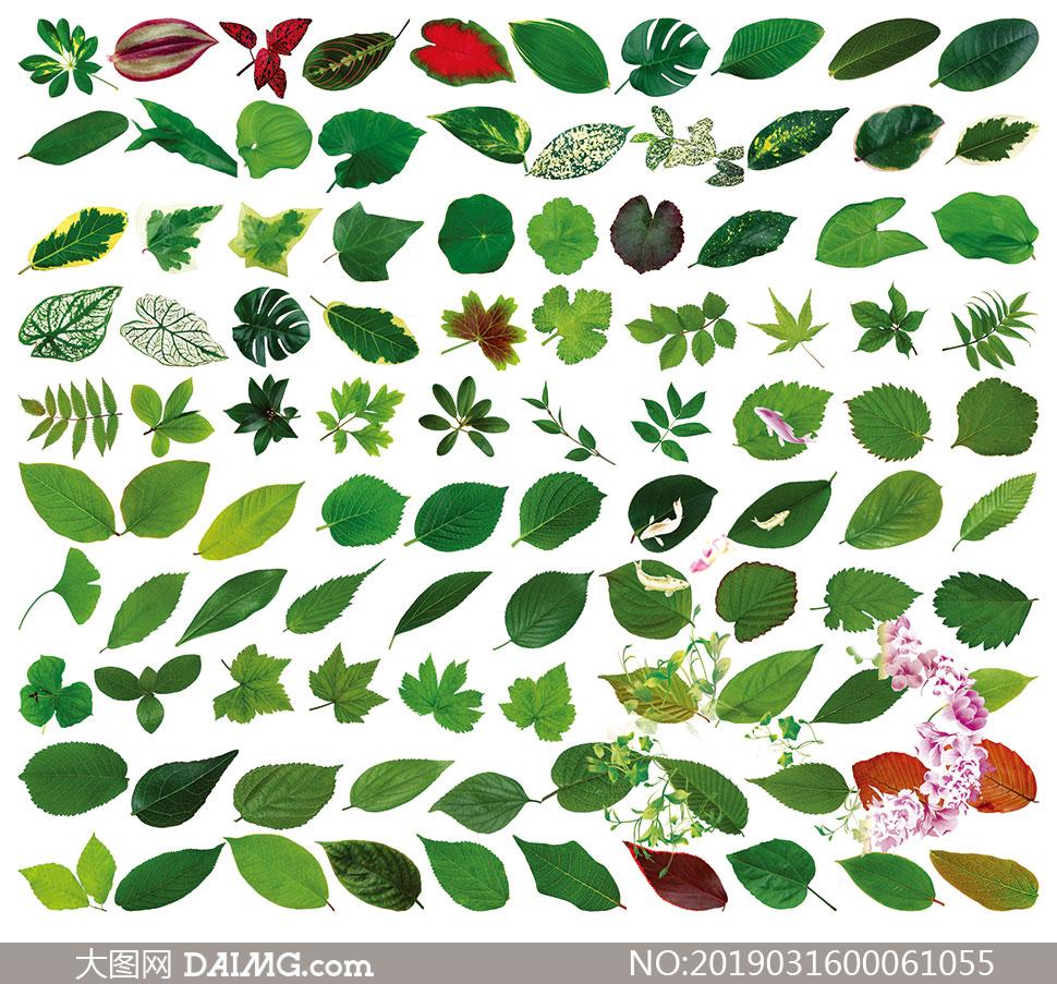 各种植物叶子PSD分层素材