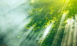 阳光梳理过的茂密树林摄影高清图片