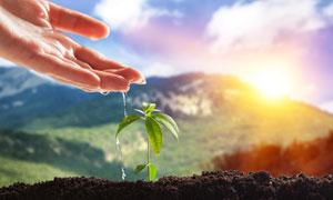 給植物幼苗澆水的情景特寫高清圖片