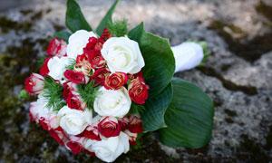 红白两色的玫瑰花捧花摄影高清图片