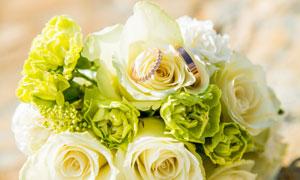 两枚戒指装饰的玫瑰花特写摄影图片