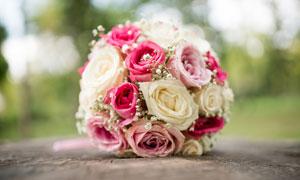 混搭色的玫瑰捧花特写摄影高清图片