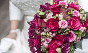 新娘手中的娇艳玫瑰花摄影高清图片