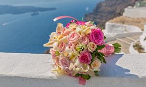 色彩鲜嫩的玫瑰花特写摄影高清图片