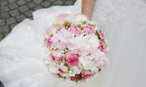 白色与粉红色鲜花特写摄影高清图片