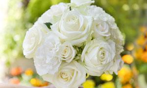 纯白色的玫瑰花束特写摄影高清图片