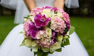 双手拿着的玫瑰花特写摄影高清图片