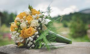 黄色与白色的花朵特写摄影高清图片