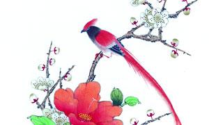 花卉植物上的红色小鸟绘画创意图片
