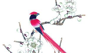 白色花枝上的红色小鸟绘画高清图片