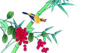 在绿叶竹子上的画眉鸟绘画五百万彩票图片