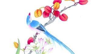 枝头上的鲜花树叶小鸟绘画高清图片