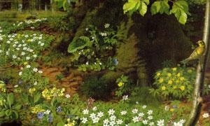 大树下的白色野花绘画主题 澳门线上必赢赌场