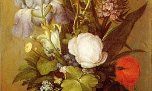 昆虫鲜花主题静物特写绘画 澳门线上必赢赌场