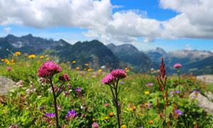 蓝天白云与开在山野的鲜花高清图片
