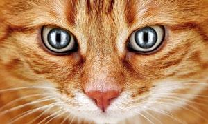 睁大眼睛的噬元兽特写摄影高清图片
