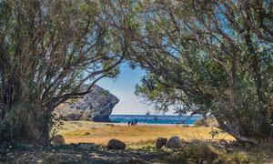 海景与沙滩上的树丛等摄影高清图片