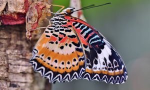 在树上做停留的大蝴蝶摄影高清图片