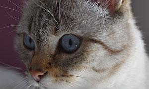 浑身毛绒绒的猫咪特写摄影高清图片