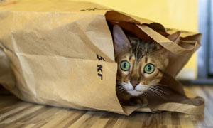 受了惊吓躲起来的小猫摄影高清图片