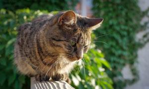 蹲在高处的猫咪特写摄影高清图片