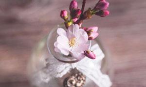 玻璃瓶中待绽放的花苞摄影高清图片