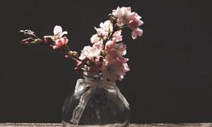 在透明玻璃瓶中的樱花摄影高清图片