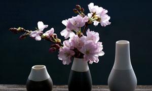 瓶子中的插花效果樱花摄影高清图片