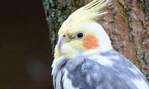 站在树枝上休息的鹦鹉摄影高清图片