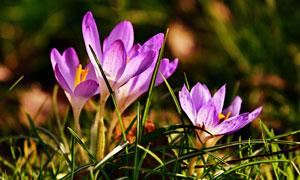 野外绽放中的花卉植物摄影高清图片