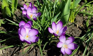 绿叶植物与紫色的花卉摄影高清图片