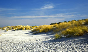 蓝天白云银滩杂草风景摄影高清图片