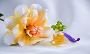 護膚精油與采摘下來的花朵高清圖片