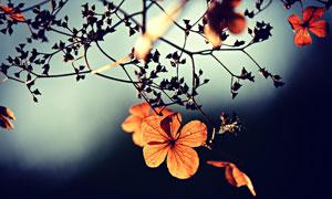 秋天树枝上的叶子近景特写高清图片
