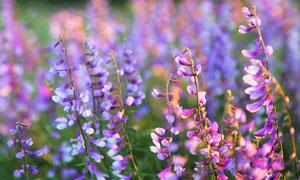 浪漫唯美花卉植物风景摄影高清图片