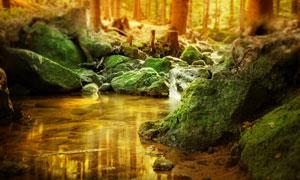 树林中长满青苔的石头摄影高清图片